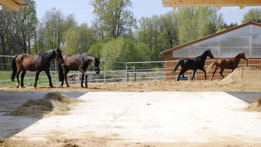 1. Mai 2019 Einzug von 18 Pferden